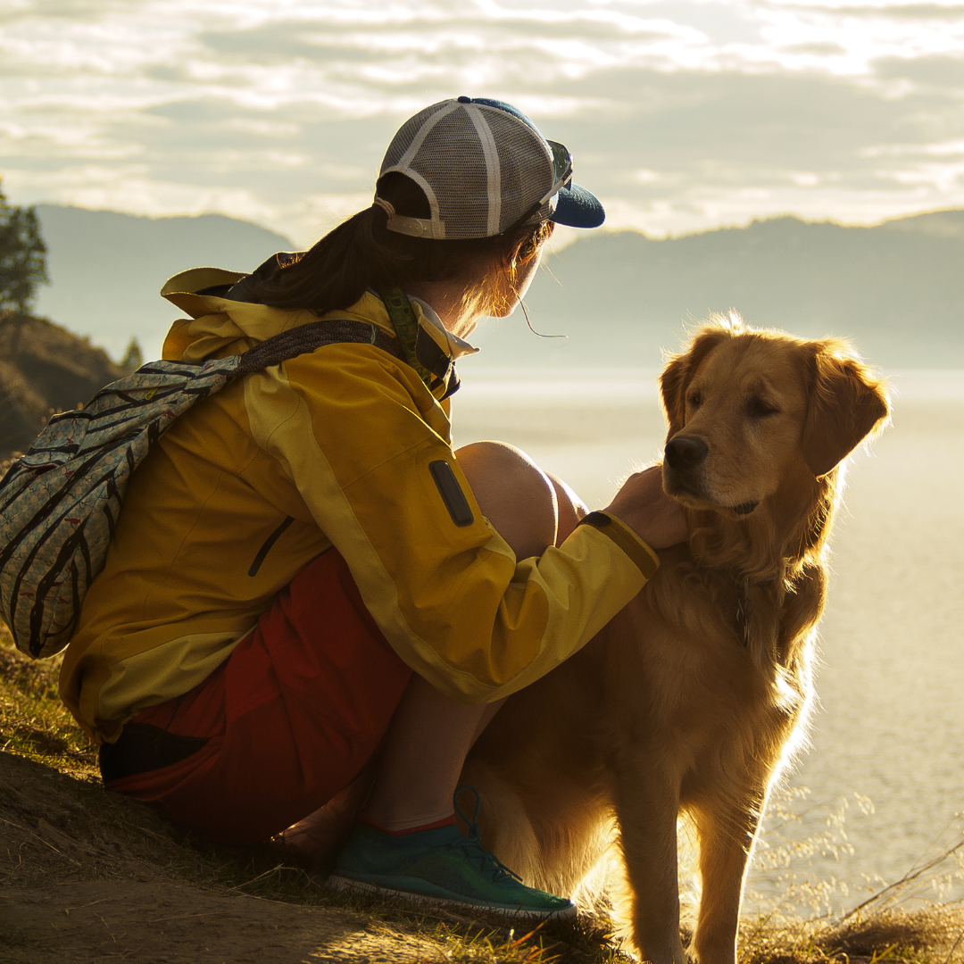 looking for hope with dog